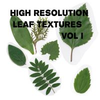 High Resolution Leaf Textures by Mig26