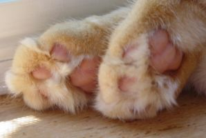 Lucy's paws1 by lucytherescuedcat