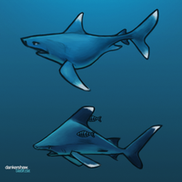 Whitetip Sharks | #Sharkweek by dankershaw
