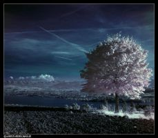 same tree IR by sicknonsens
