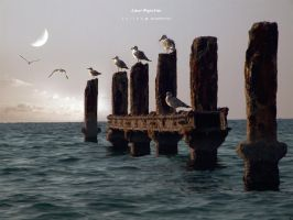 Lunar Migration by Yelled