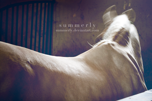 Lipizzaners - III by Summerly