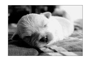 ...le chiot... by llMacabreShadowll