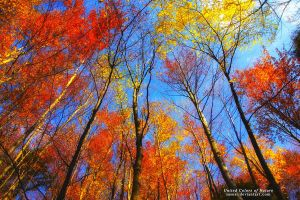 United Colos of Nature by SasoSi
