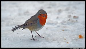 Icey Robin by andy-j-s