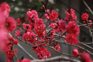 Butterfly among Camellia by satriakid