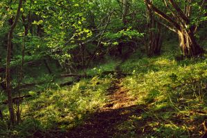 Grove Valley Wood by younghappy