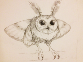 moth owl!! by PurpleShell