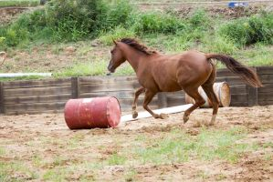KM QH canter side view by Chunga-Stock