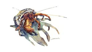 Hermit Crab by sheldonsartacademy