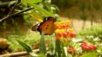 Butterfly 2 by dafna14495