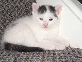 Another kitten on the stairs by mephilesxdarkness