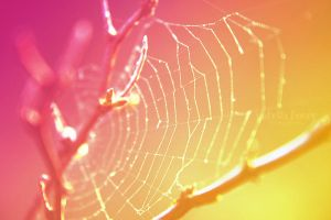 sunray color web by little-billie