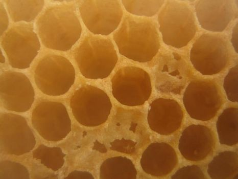 Honey Comb by hardlycomplex