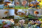 Small frosty natural beautys by MT-Photografien