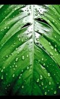 Droplets on leaf. . . by MerylBenny