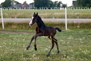 WB Filly 2 by Colourize-Stock