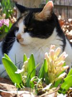 Calico in the Flowers04 by effing-stock