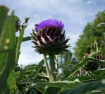 Buzzing around in a thistle by ancoben
