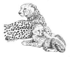 Cheetah Family by RakuraiWolf