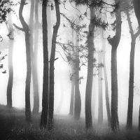 Misty Forest by Hengki24