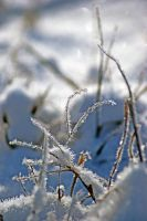Snow from a bug's perspective by flowersteph