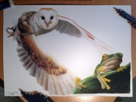Owl and Frog Color Pencil Drawing by AtomiccircuS