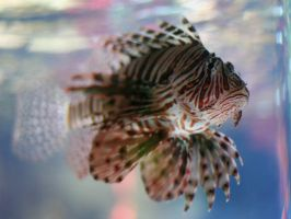 scorpion fish by evelynzee