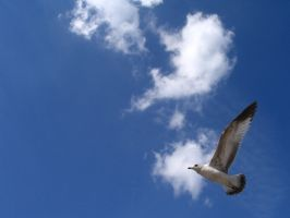 Seagull in the Sky by eva44