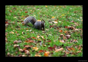 Little squirrel by AmbientExposures