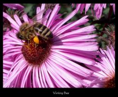 Working Bee by chakram