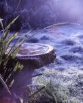 Frozen Morning by Forestina-Fotos