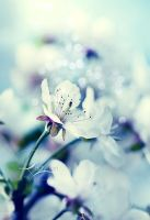 Blue Bokeh by Lady-Tori