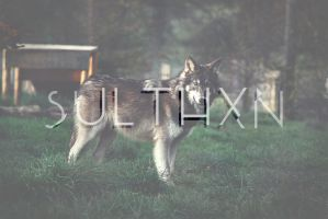 SULTHXN : HIPSTER Logo by sulthxn