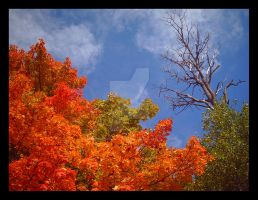 Autumn Against the Sky I by Jenna-Rose