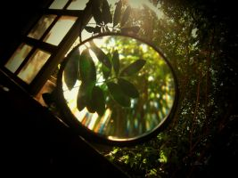 Magnifier by LiviaVi