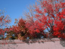 Colourful Trees - Stock by Ravens-Stock