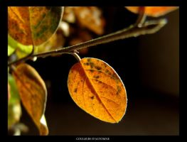 Colors of autumn by leonard-ART