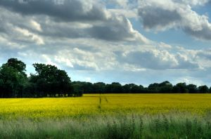 Suffolk field by JimPMM