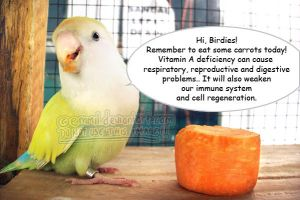 Carrot ads with Pippin by emmil