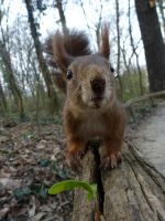 Squirrel 207 - Curiousity by Cundrie-la-Surziere