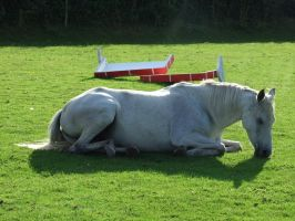 Misty Lying Down - 2 by EquinePhotoandStock