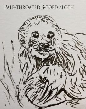 Inktober Pale-throated 3-Toed Sloth mini-sketch by AoiKita
