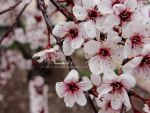 Blossom Collection I by musicfreak937