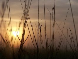 good good morning, sun by Mr-Catastrophical
