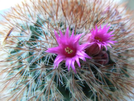 Look on my cactus. by Clairei