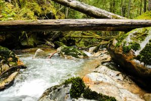 Up the Creek by wheeler-photographic