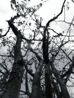 angry tree by Merdoll