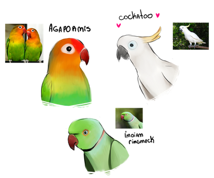 My fav birds. (sketches) by MelooonConVino
