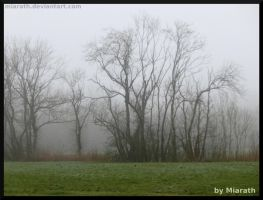 Just Trees In The Fog by Miarath